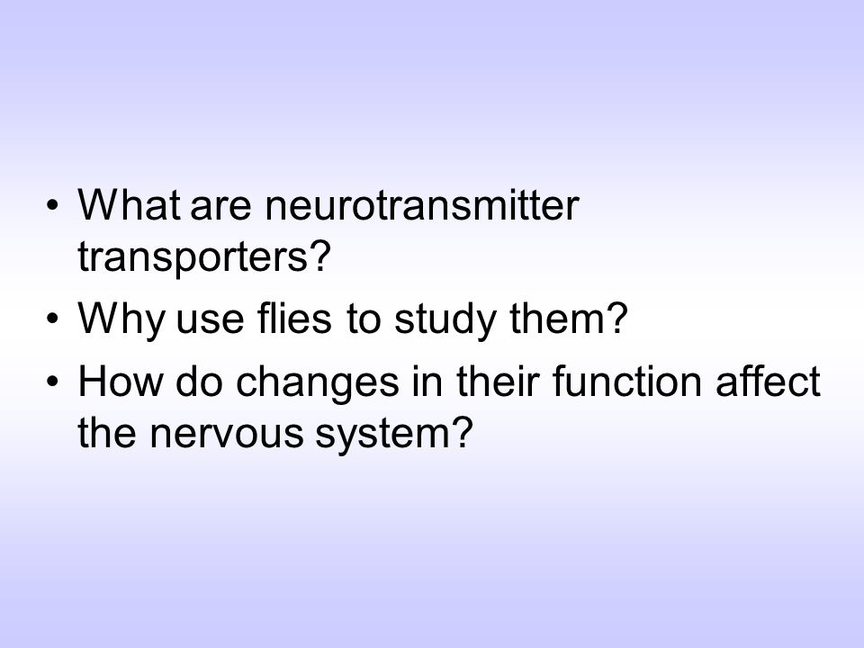 What are neurotransmitter transporters