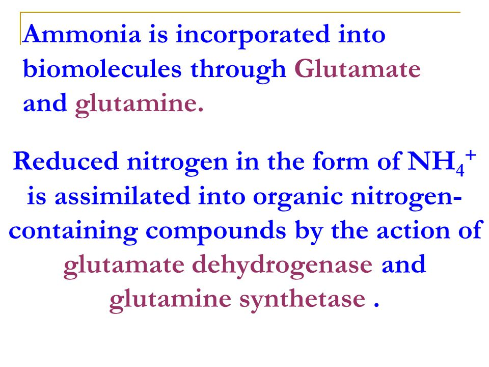 Ammonia is incorporated into biomolecules through Glutamate and glutamine.