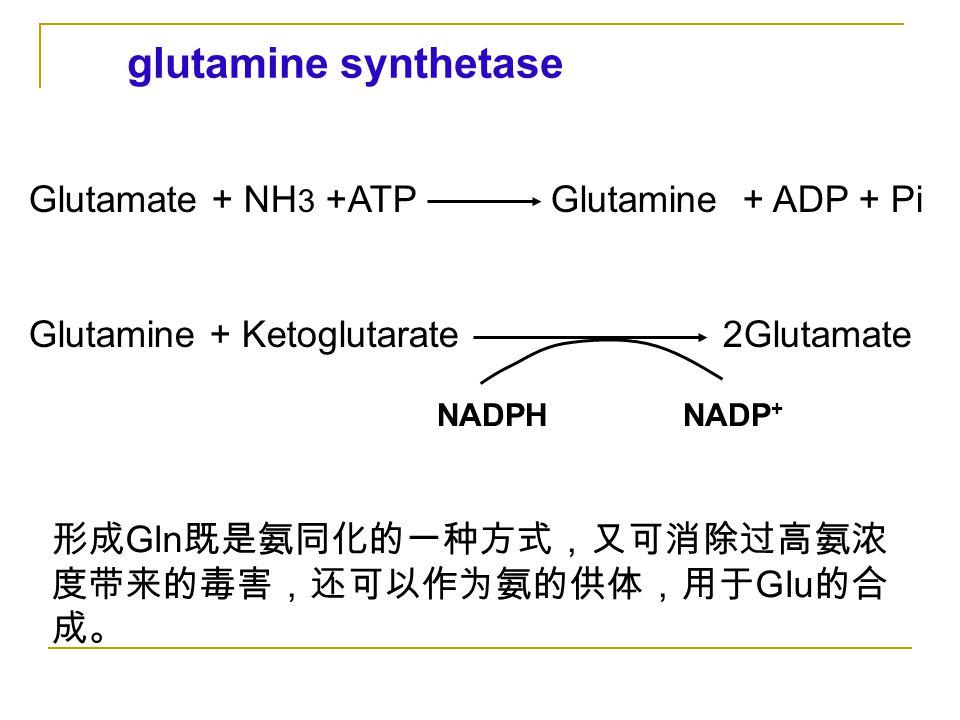 glutamine synthetase Glutamate + NH3 +ATP Glutamine + ADP + Pi