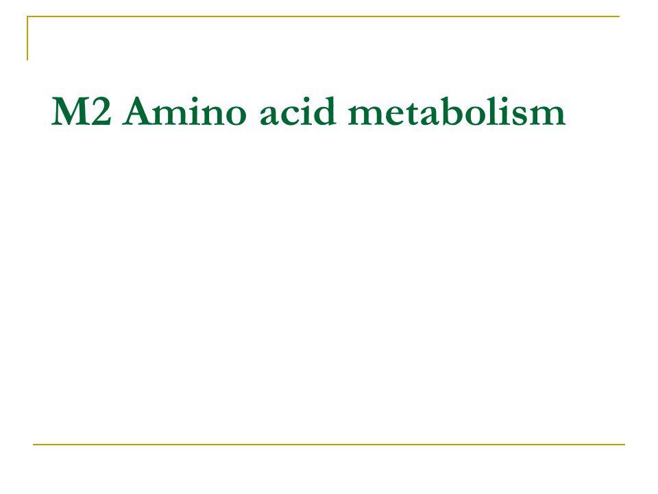 M2 Amino acid metabolism