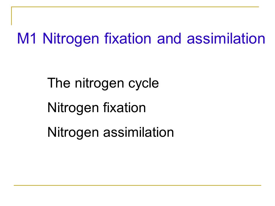 M1 Nitrogen fixation and assimilation