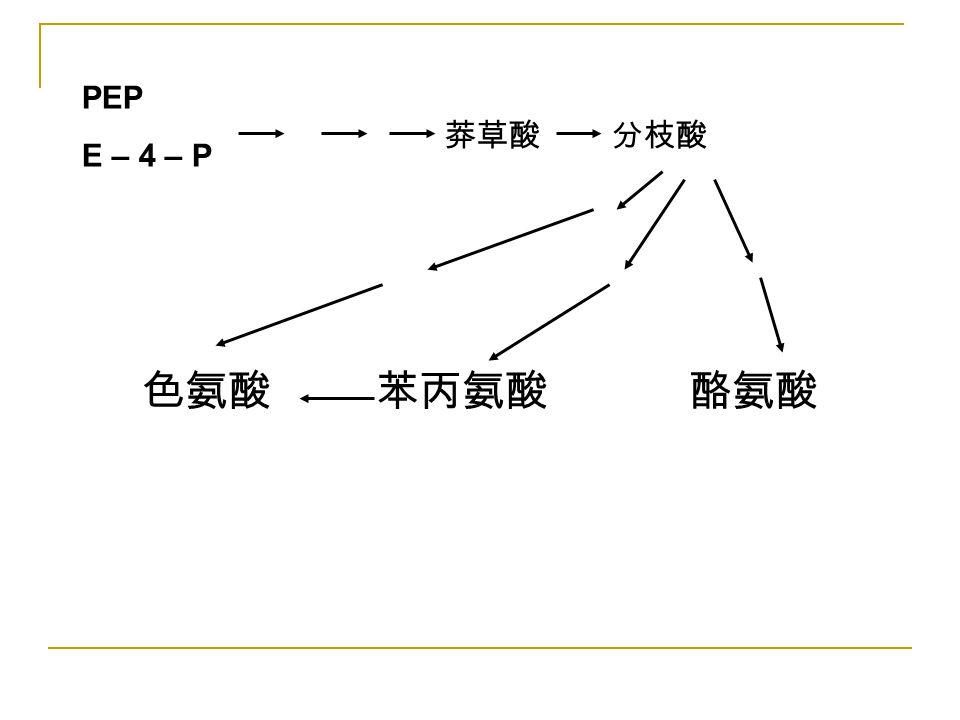 PEP E – 4 – P 莽草酸 分枝酸 色氨酸 苯丙氨酸 酪氨酸