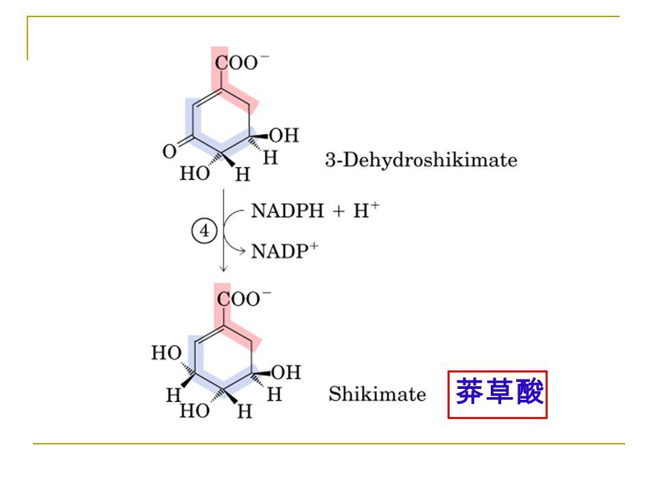 Figure 22-16-04 莽草酸