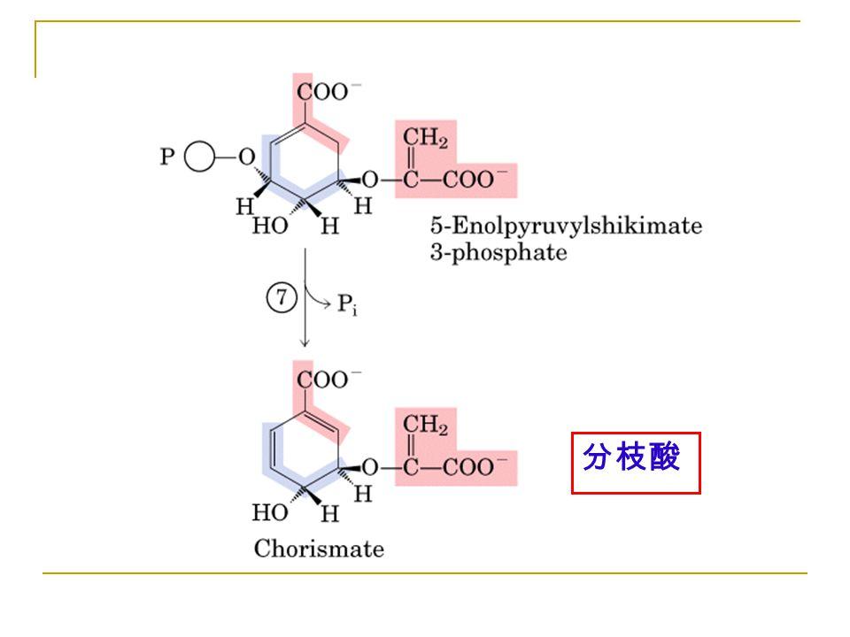 Figure 22-16-07 分枝酸