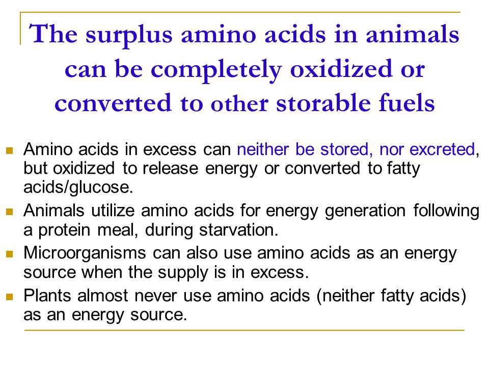 The surplus amino acids in animals can be completely oxidized or converted to other storable fuels