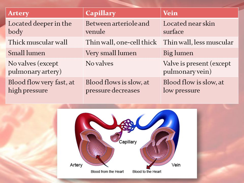 Artery Capillary. Vein. Located deeper in the body. Between arteriole and venule. Located near skin surface.
