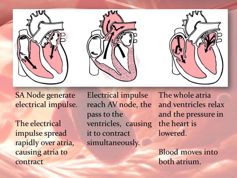 SA Node generate electrical impulse.