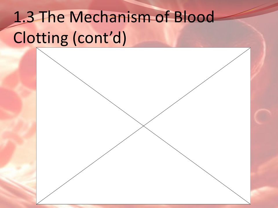 1.3 The Mechanism of Blood Clotting (cont'd)