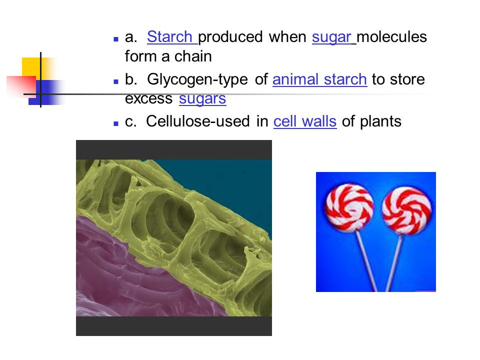 a. Starch produced when sugar molecules form a chain