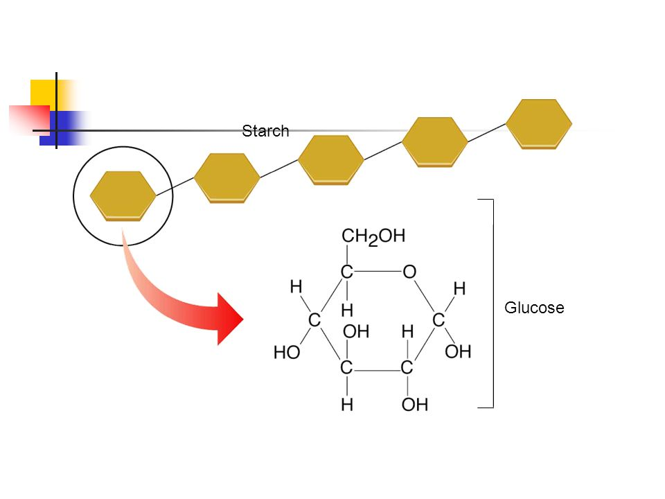 Figure 2-13 A Starch Section 2-3 Starch Glucose Go to Section: