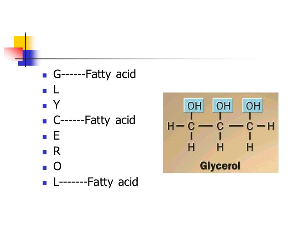 G------Fatty acid L Y C------Fatty acid E R O L Fatty acid