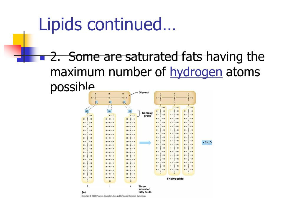 Lipids continued… 2. Some are saturated fats having the maximum number of hydrogen atoms possible.