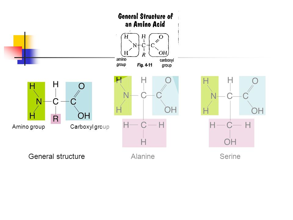 Figure 2-16 Amino Acids General structure Alanine Serine Section 2-3