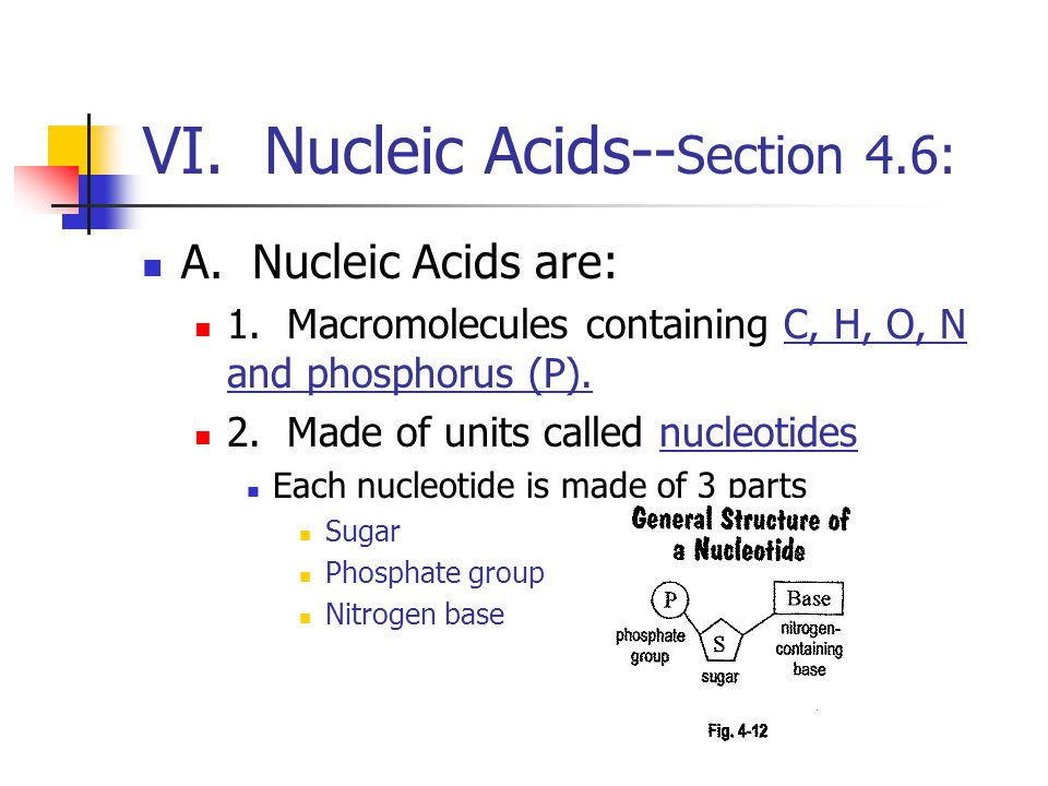 VI. Nucleic Acids--Section 4.6: