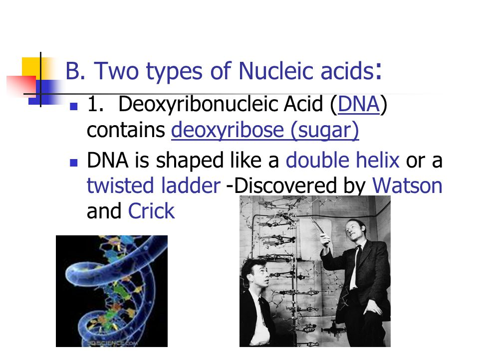 B. Two types of Nucleic acids: