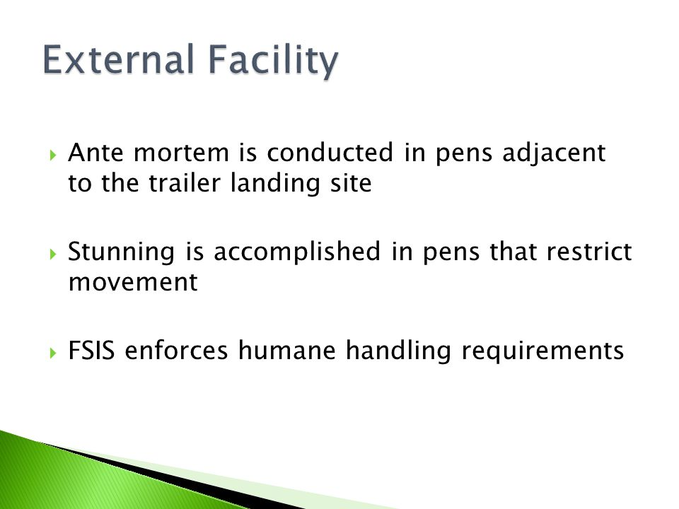 External Facility Ante mortem is conducted in pens adjacent to the trailer landing site. Stunning is accomplished in pens that restrict movement.