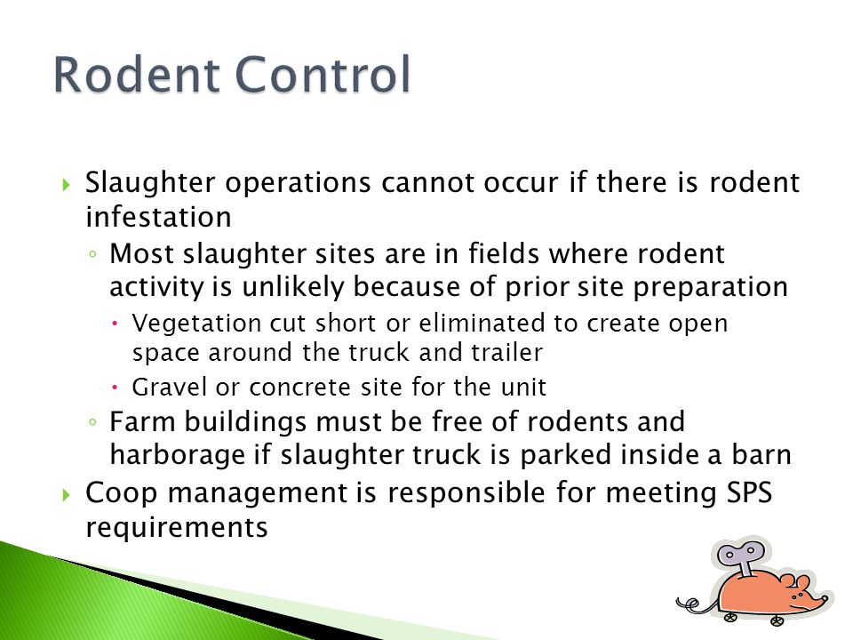 Rodent Control Slaughter operations cannot occur if there is rodent infestation.
