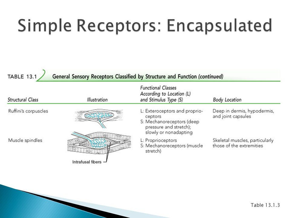 Simple Receptors: Encapsulated