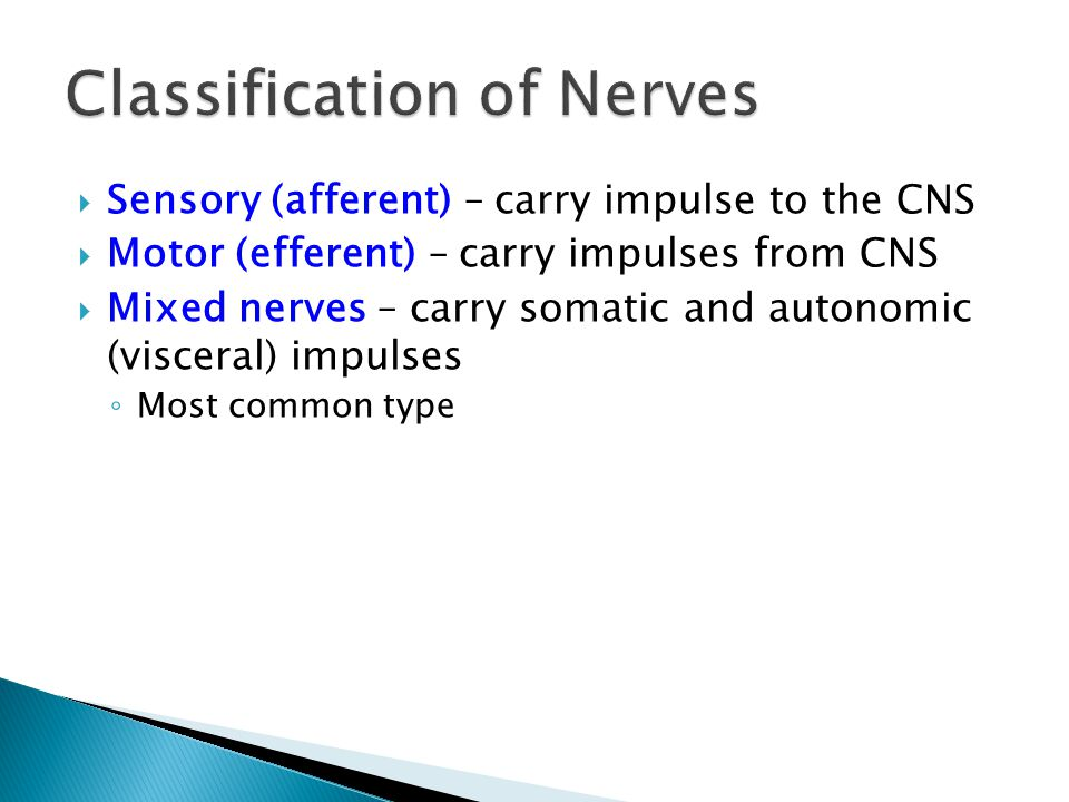 Classification of Nerves