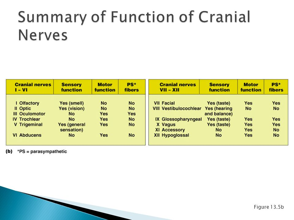Summary of Function of Cranial Nerves