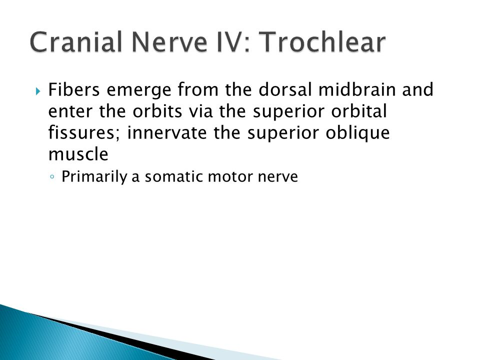 Cranial Nerve IV: Trochlear
