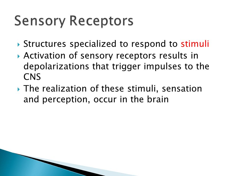 Sensory Receptors Structures specialized to respond to stimuli