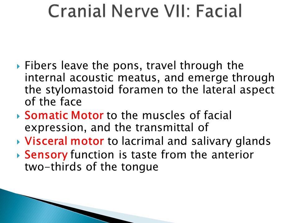 Cranial Nerve VII: Facial