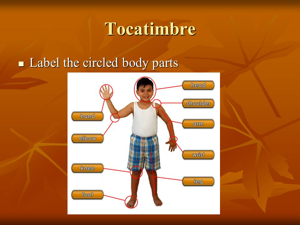 Tocatimbre Label the circled body parts