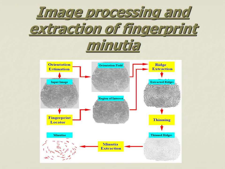 Image processing and extraction of fingerprint minutia