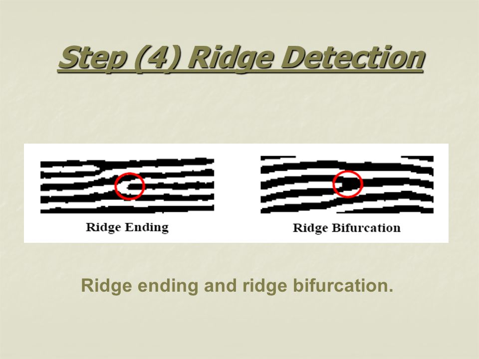 Step (4) Ridge Detection