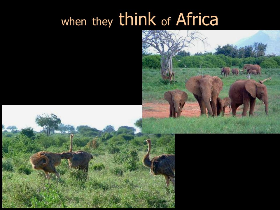 when they think of Africa