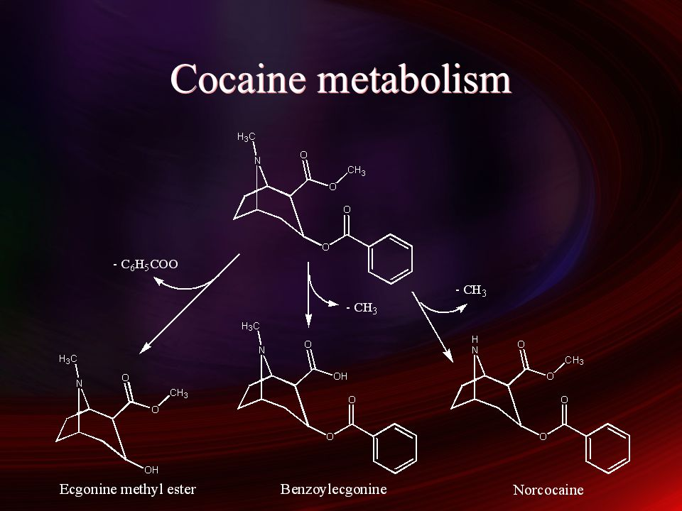 Cocaine metabolism