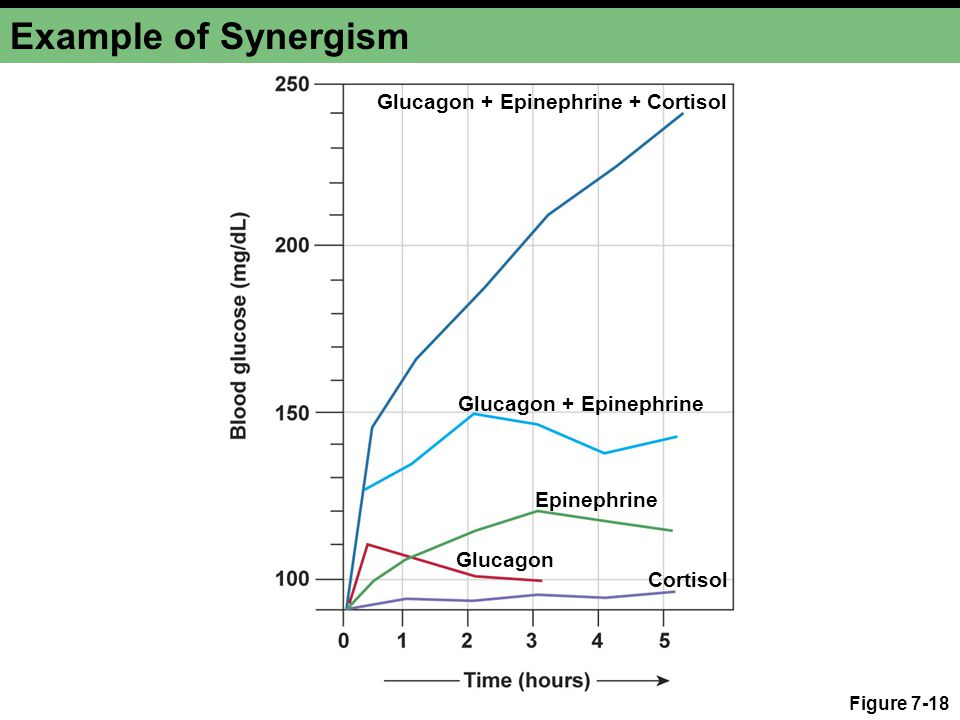 Example of Synergism Glucagon + Epinephrine + Cortisol