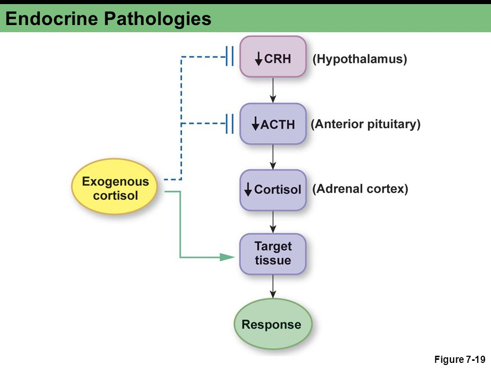 Endocrine Pathologies