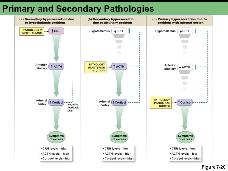 Primary and Secondary Pathologies