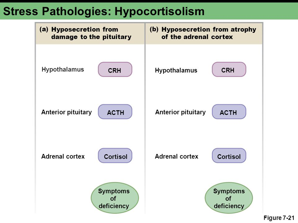 Stress Pathologies: Hypocortisolism