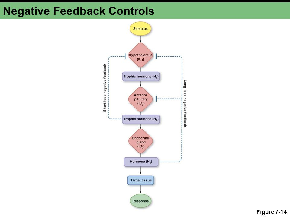 Negative Feedback Controls