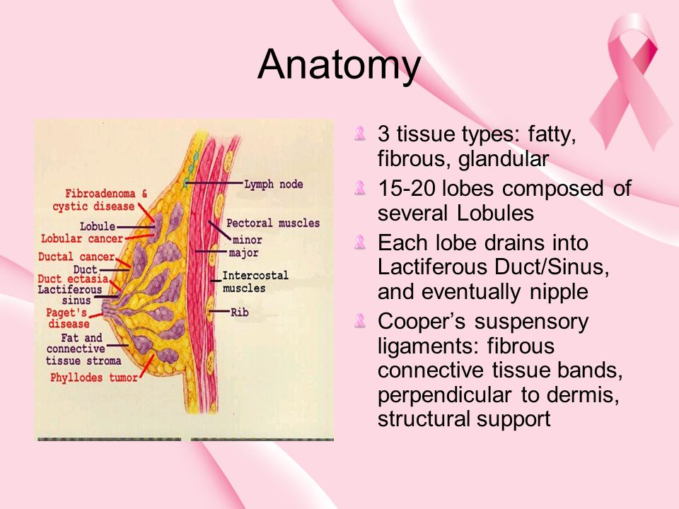 Anatomy 3 tissue types: fatty, fibrous, glandular