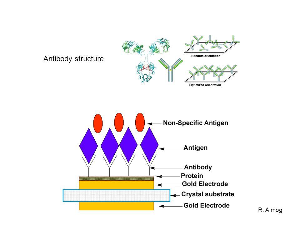 Antibody structure R. Almog