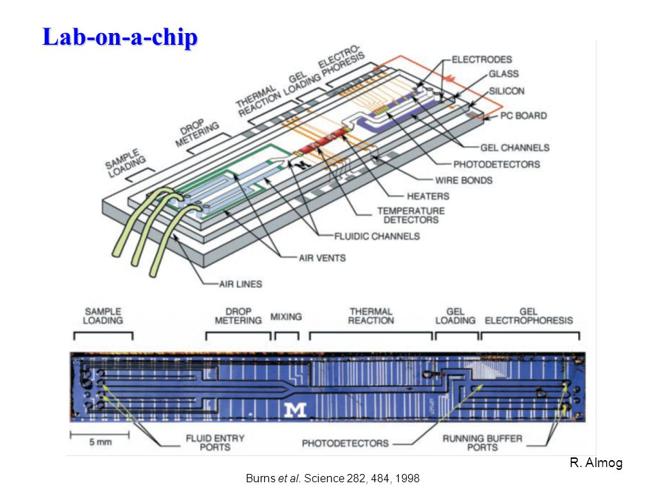 Lab-on-a-chip R. Almog Burns et al. Science 282, 484, 1998