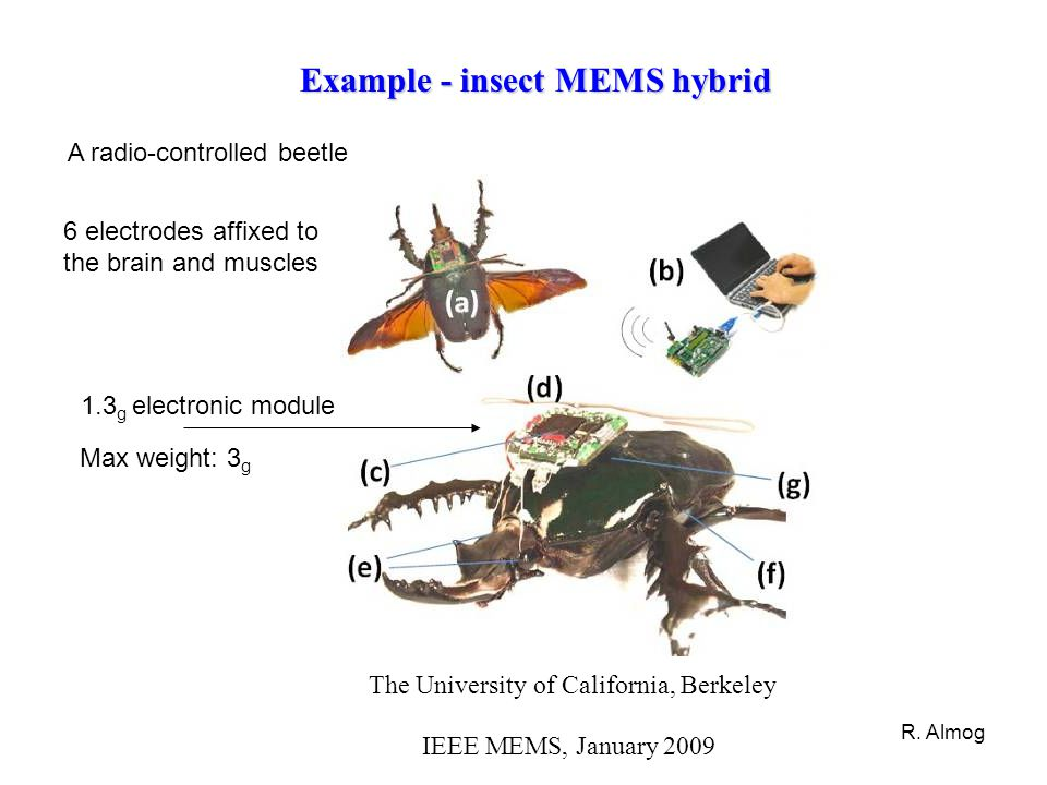 Example - insect MEMS hybrid