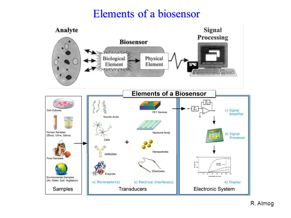 Elements of a biosensor