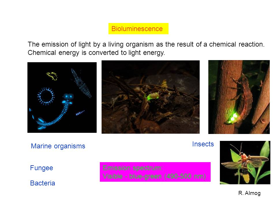 Chemical energy is converted to light energy.