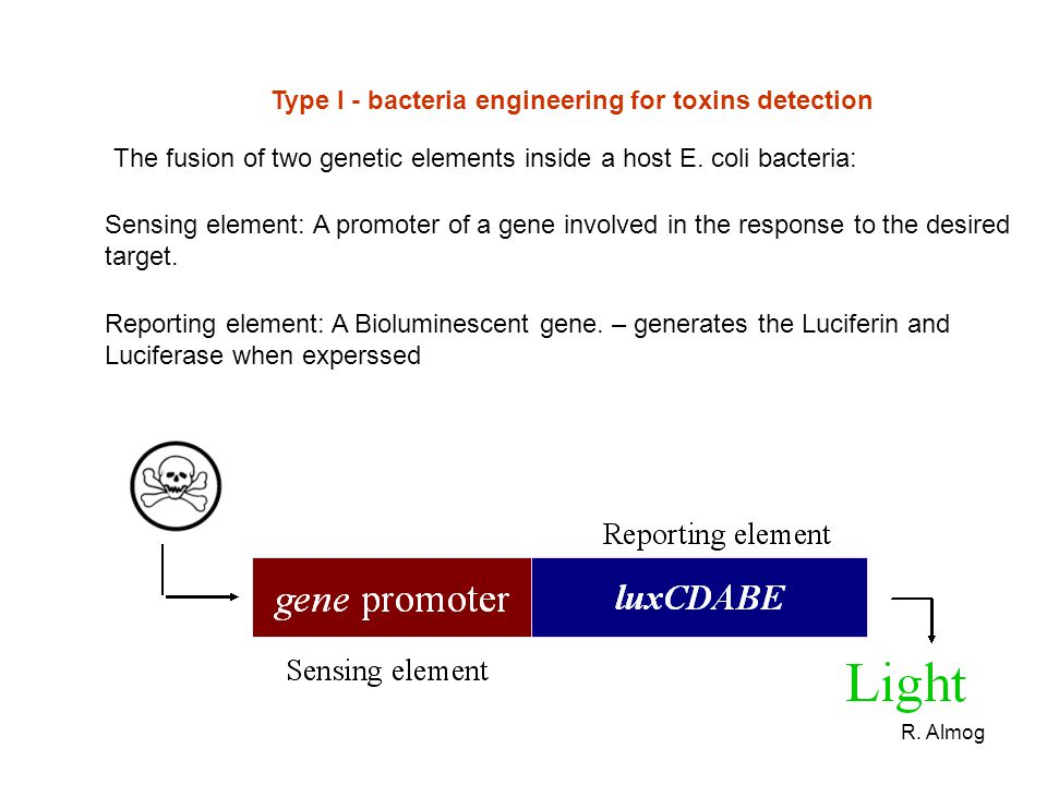 Type I - bacteria engineering for toxins detection