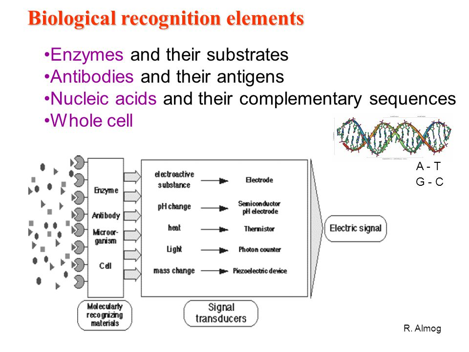 Biological recognition elements