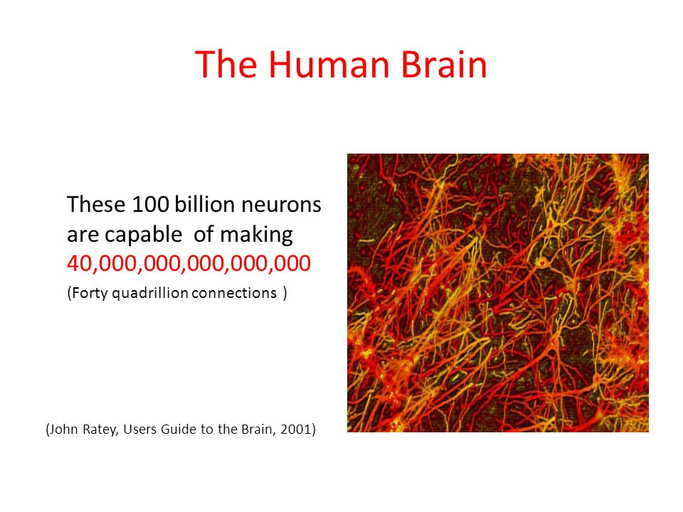 The Human Brain These 100 billion neurons are capable of making 40,000,000,000,000,000. (Forty quadrillion connections )