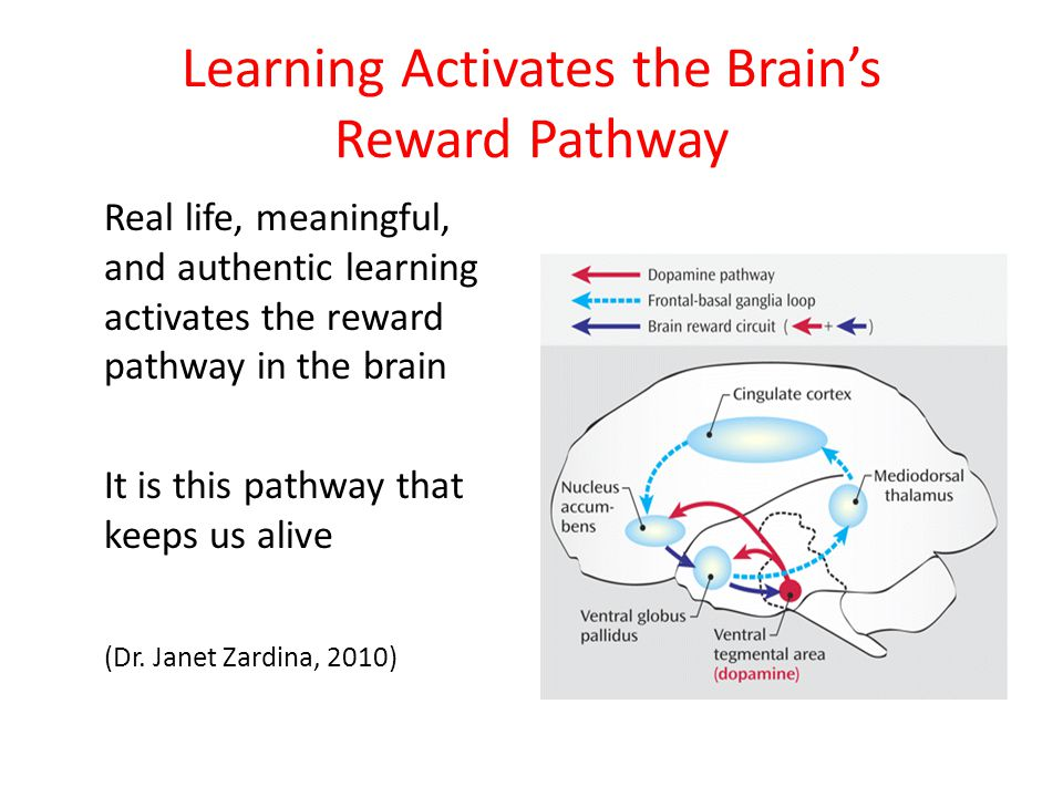 Learning Activates the Brain's Reward Pathway