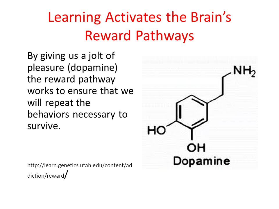 Learning Activates the Brain's Reward Pathways