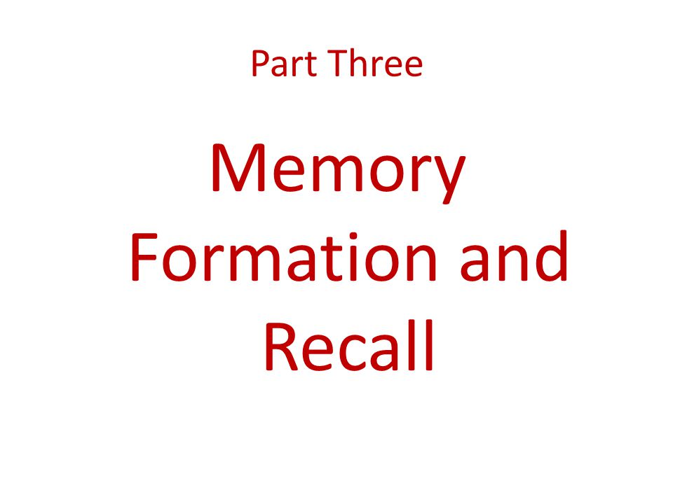 Memory Formation and Recall