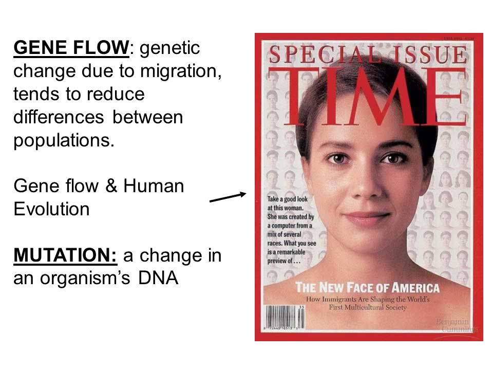 GENE FLOW: genetic change due to migration, tends to reduce differences between populations.